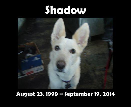 Sunday nibble #81: Me and myShadow